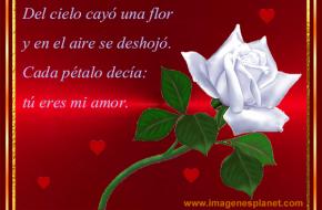 Imagenes de rosas blancas