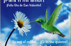 postales de colibri y la flor