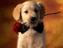Postales Tiernos de San Valentin