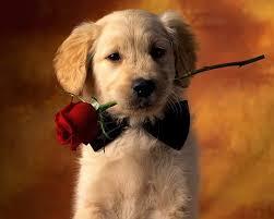 Postales Tiernos de San Valentin para compartir con Facebook