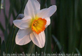 De una simple semilla nace una flor y el amor
