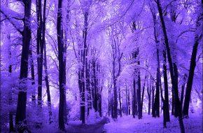 Imagenes de bellos paisajes para compartir