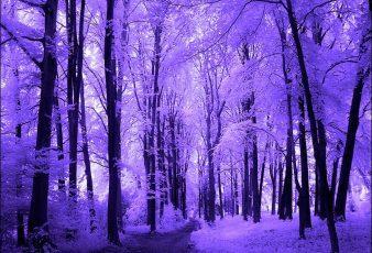imagenes hermoso paisaje