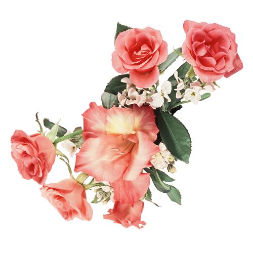 Imágenes De Rosas Y Flores Con Movimiento Para Compartir Banco De